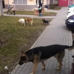 CL Alba Iulia va lua în discuție concesionarea serviciului de ecarisaj și construcția noului adăpost pentru câini