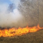 Un incendiu de vegetație uscată s-a produs ieri seară în zona Schit din Alba Iulia