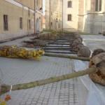 82 de arbori ornamentali aduși din Ungaria vor fi plantați pe străzile și în parcurile din Alba Iulia