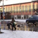 """Mame cu copii atacate în plină stradă în cartierul """"Lumea Nouă"""" din Alba Iulia de haitele de câini vagabonzi"""