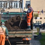 """Încă 120 de arbori vor contribui la ƒ""""oxigenarea"""" municipiului Alba Iulia"""