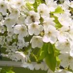 Mesaje de Florii 2014. SMS-uri, felicitări și urări de Sărbătoarea Floriilor | albaiuliainfo.ro