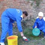Miercuri și joi se va desfășura la Alba Iulia o acțiune de combatere a rozătoarelor
