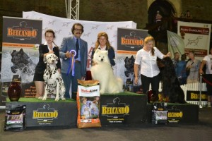 alba-carolina-cup-2014-samoyed