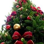 Semnificaţia împodobirii bradului de Crăciun la români – simbolul bradului de Crăciun | albaiuliainfo.ro