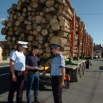 Peste 33 de metri cubi de material lemnos transportați fără acte de proveniență au fost confiscați de polițiștii din Alba Iulia