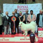 """Samoyed-ul Caramel din Pitești a câștigat """"Supreme Best in Show"""", titlul de cel mai frumos câine al expoziției chinologice 2016 de la Alba Iulia"""