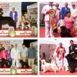 """Peste 1.000 de câini din 16 țări participă în weekend la cea de-a IX-a ediție a """"Royal Crown Trophy"""", de la Alba Iulia. Vezi programul"""