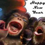 Mesaje de Anul Nou 2019 haioase. URARI și FELICITARI amuzante pe care le puteți trimite prietenilor | albaiuliainfo.ro