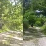 Avertizare RO-ALERT! A fost semnalată prezența unui urs în apropierea pădurii de lângă cartierului Pâclișa din Alba Iulia